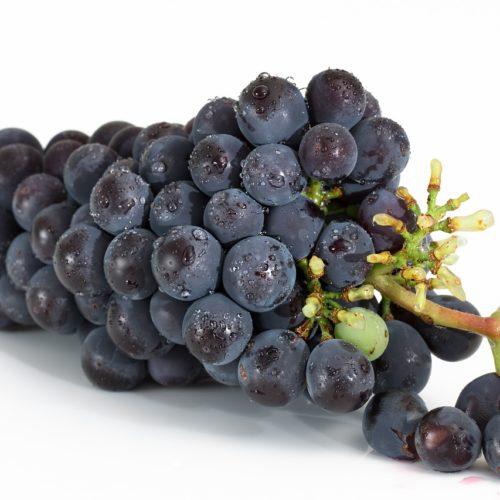Obst Trauben Blau