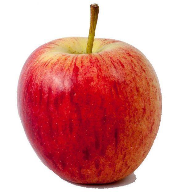Apfel Gala Obst