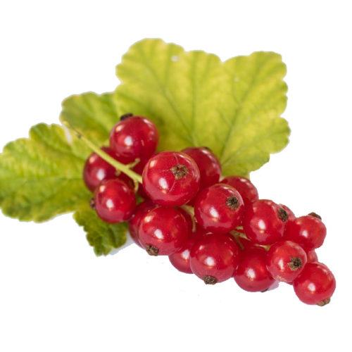 Obst Johannisbeeren