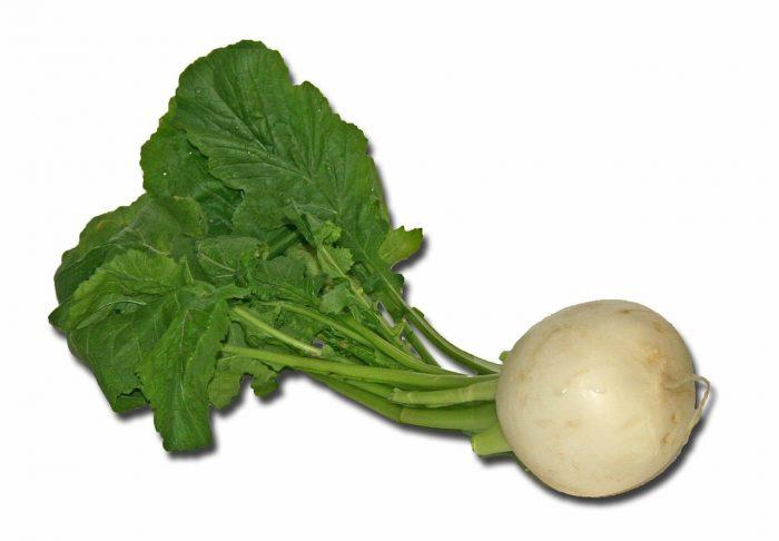 Gemüse-Rettich