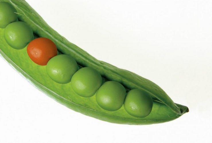 Gemüse Zuckerschoten